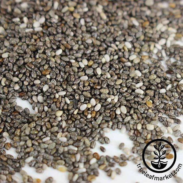 Chia (organic) Seed for Microgreens