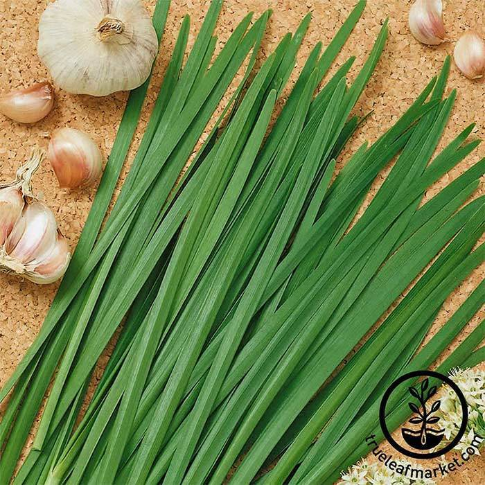 Chives - Garlic Herb Seed