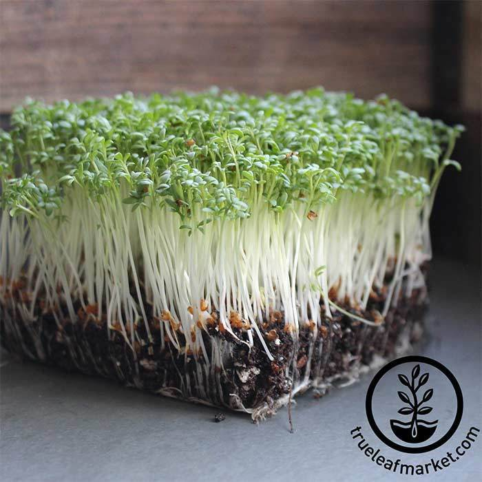 Back to the Roots Aquafarm Seed Refills - Water Garden Seed