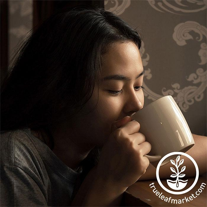 Woman Drinking Herbal Tea