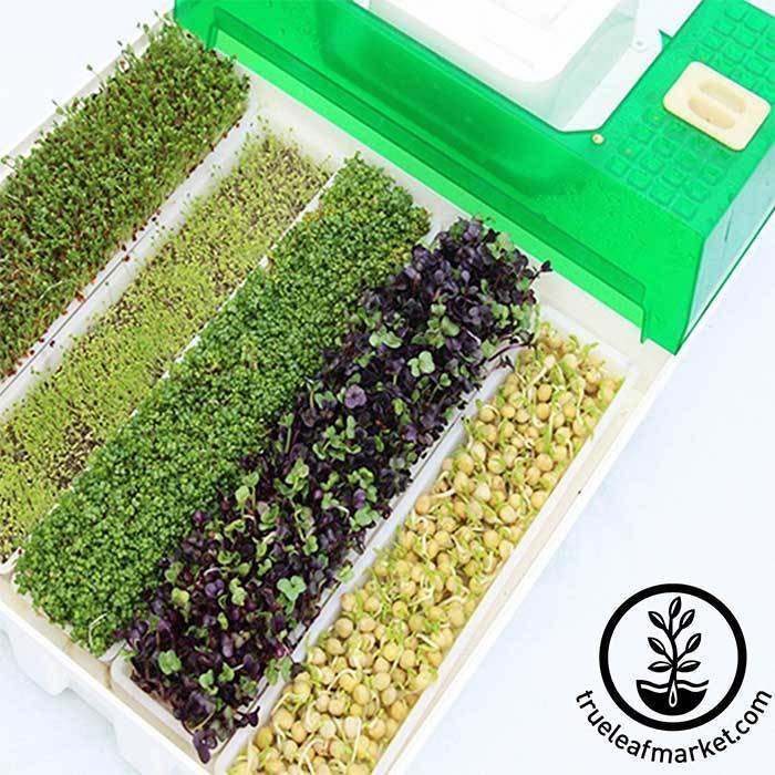 Easygreen Seed and Microgreen Sprouter