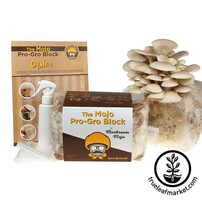 Elm Oyster Mushroom Growing Kit