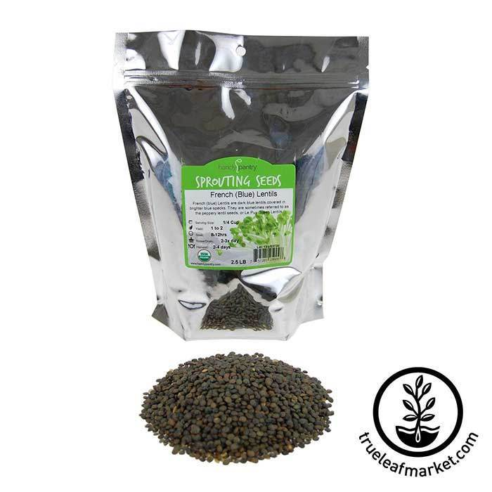 Lentils - French Blue Sprouting Seed - Organic 2.5 lb