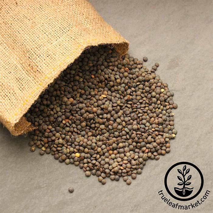 French Blue Lentils (organic) - Bulk Grains & Foods