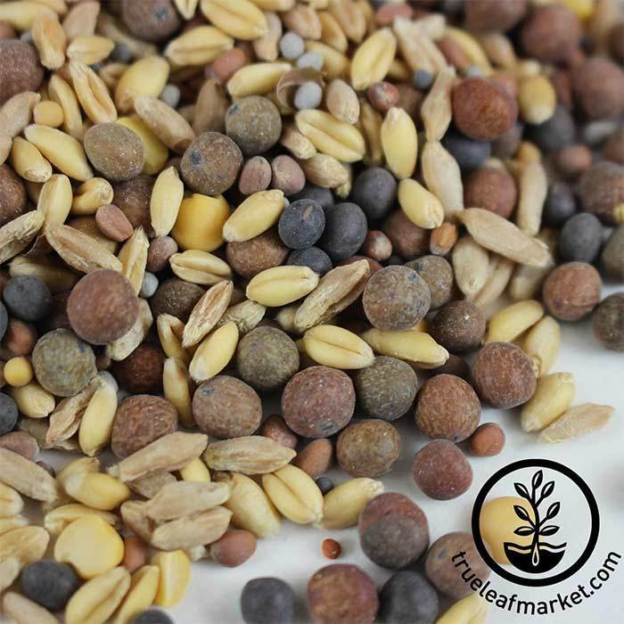 Non-GMO Cover Crop Mix Close Up Seed