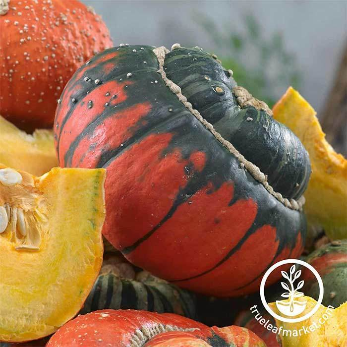 Gourds Turks Turban Vegetable Seed