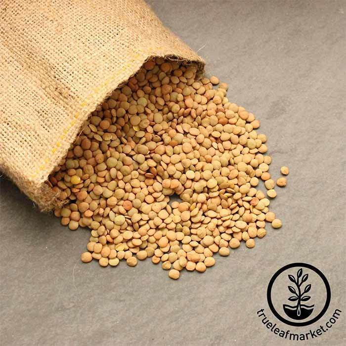 Green Lentils (organic) - Bulk Grains & Foods