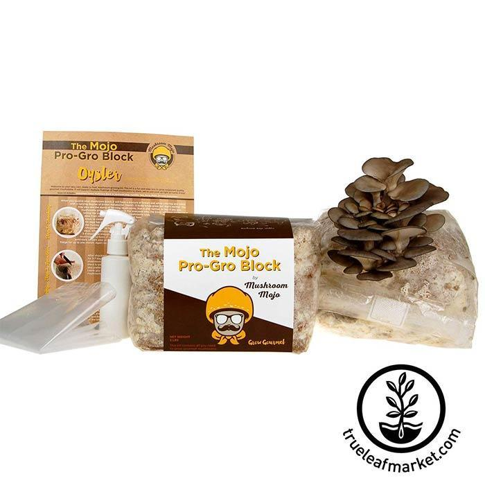 Grey Oyster Mushroom Growing Kit