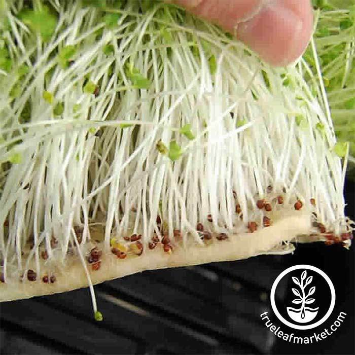 Micro-Mats Hydroponic Grow Pads in action