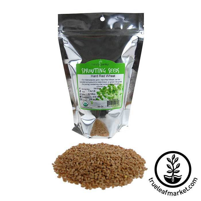 Wheat Seed (for Wheatgrass): Hard Red - Organic 1 lb