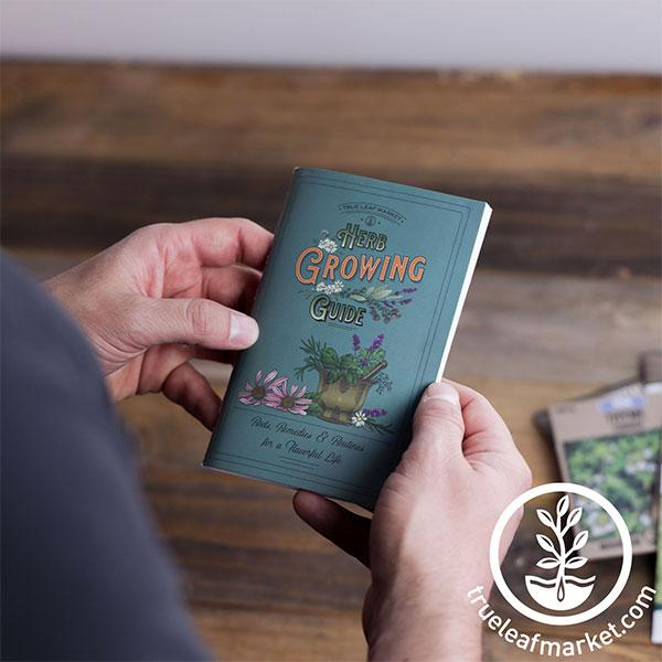 holding herb growing guide