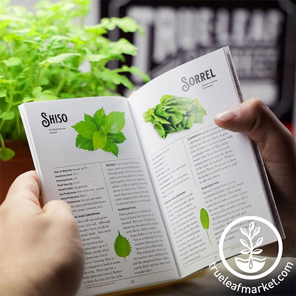 reading herb growing guide