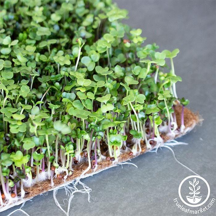 Jute Microgreens Grow Mats - Roll Close Up Microgreens growing