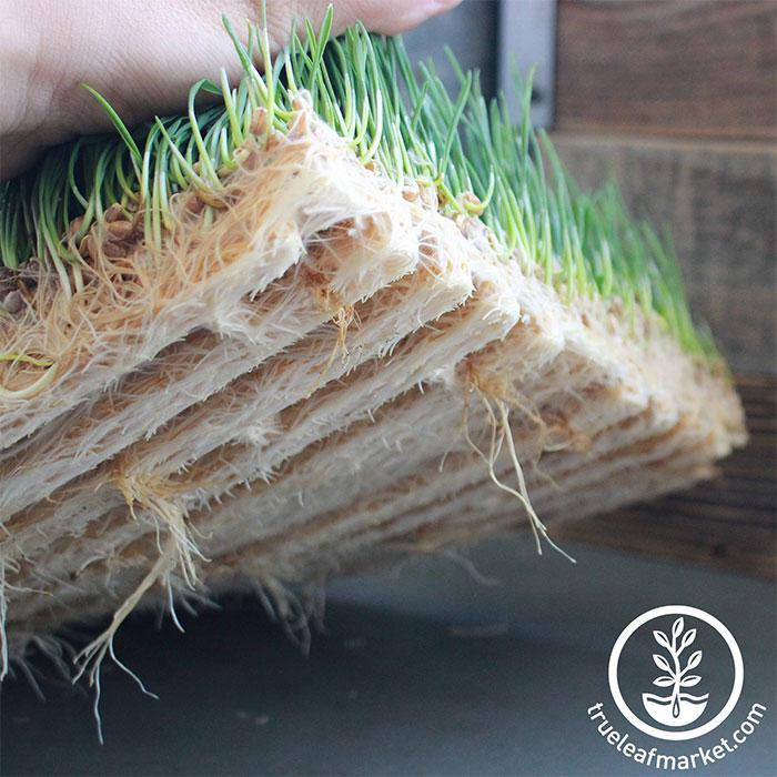 Jute Microgreens Grow Mats - 10x20 close up mat