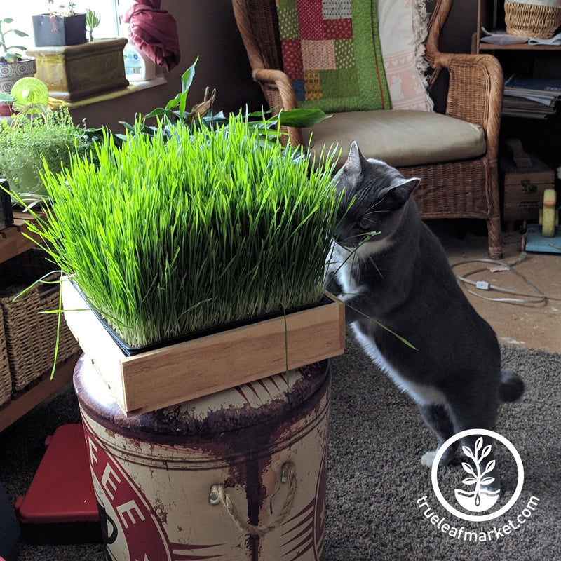 Dog & Cat Pet Grass Kit