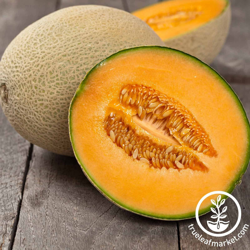 Melon Cantaloupe Imperial 45 Seed