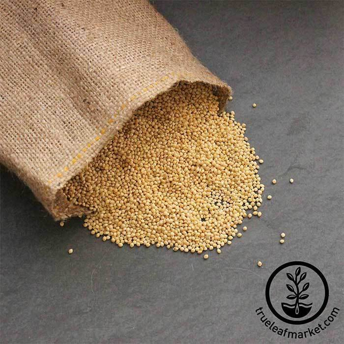 Whole Millet (organic) - Bulk Grains & Foods