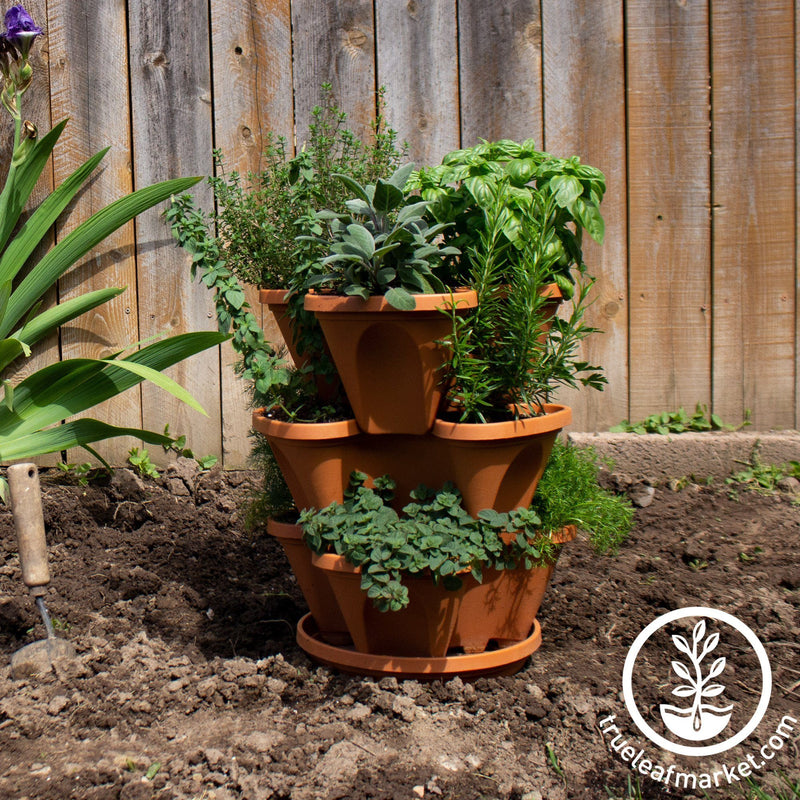 Culinary Herb Garden Planter