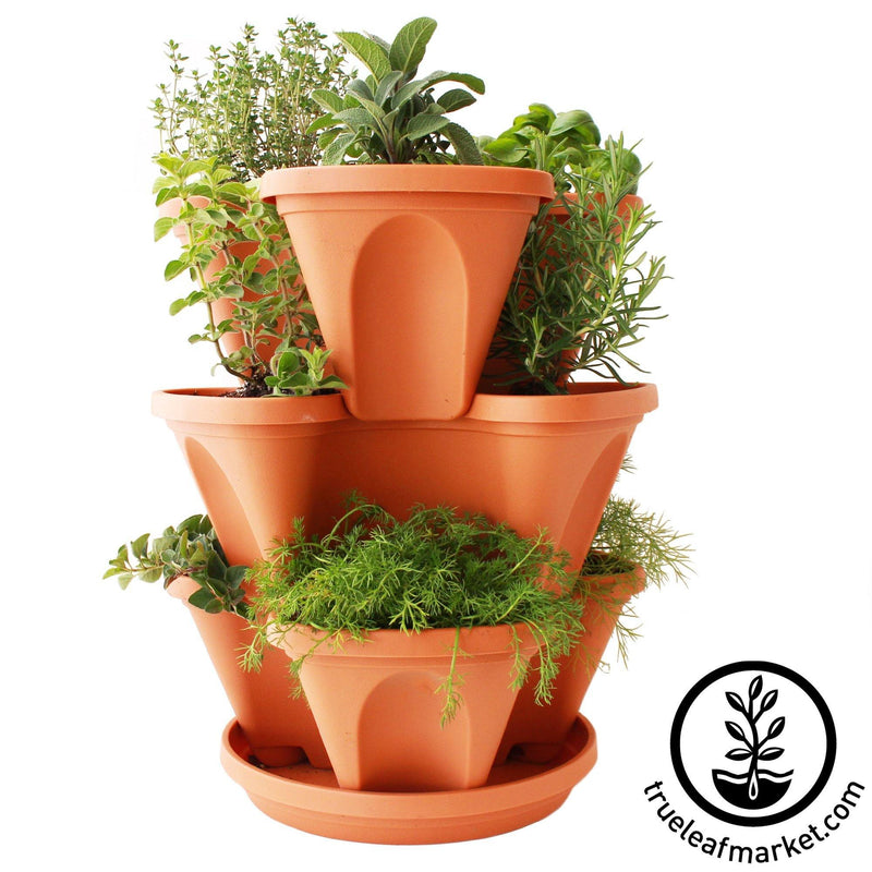Terracotta Planter & Culinary Herbs