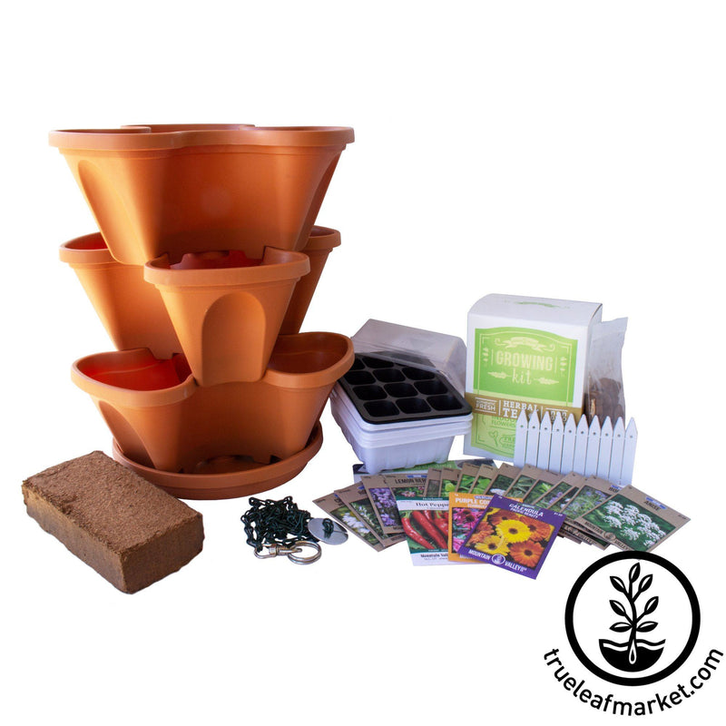 Medicinal & Tea Herbs Grow Kit - Terracotta Clay