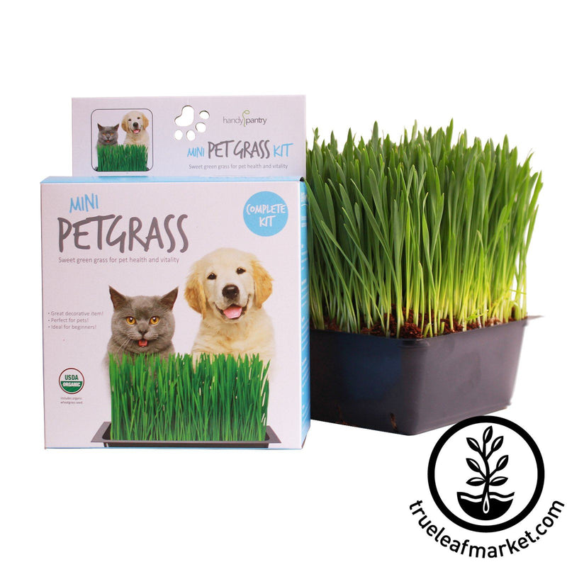 Mini Pet Grass Kit Grown