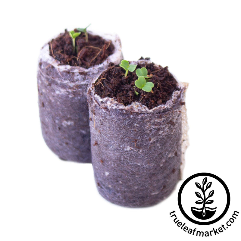minute soil netted puck with seedlings