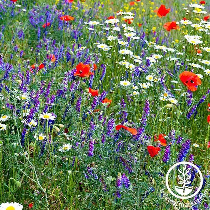 Partial Shade Wildflower Mix Seeds
