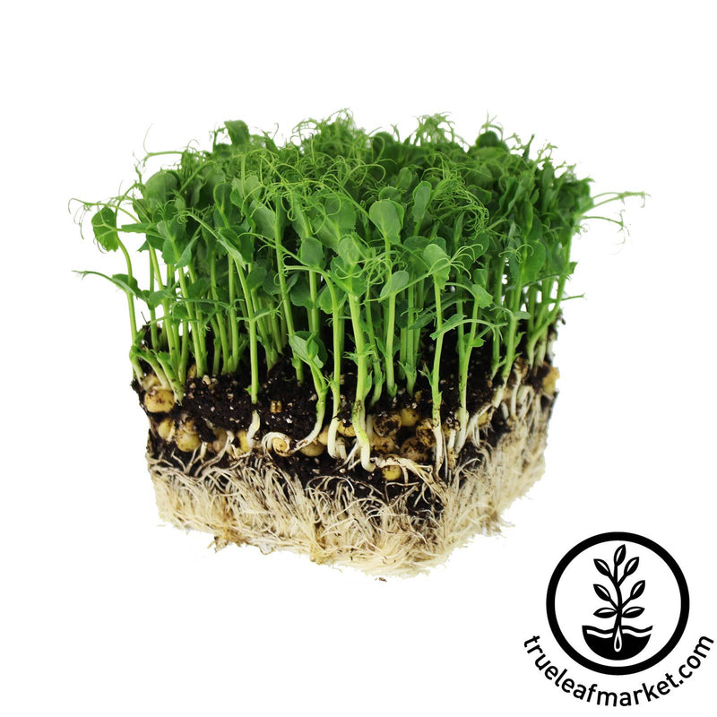 Seed Assortment: Microgreen Seeds - Soil Selection