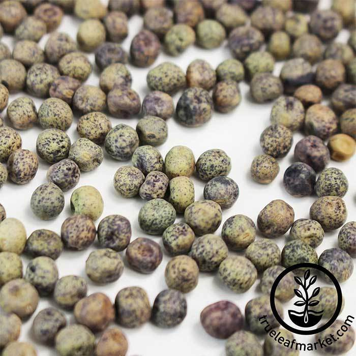 Pea - Speckled (Organic) - Microgreens Seeds Close Up