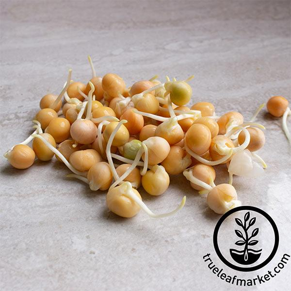 Yellow Pea - Organic - Sprouting Seeds