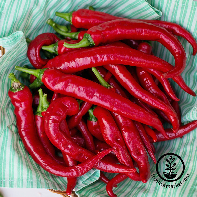 hot cayenne thick pepper