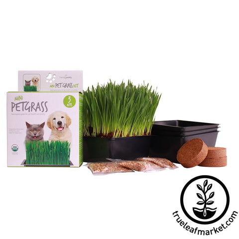 Pet Grass Kit
