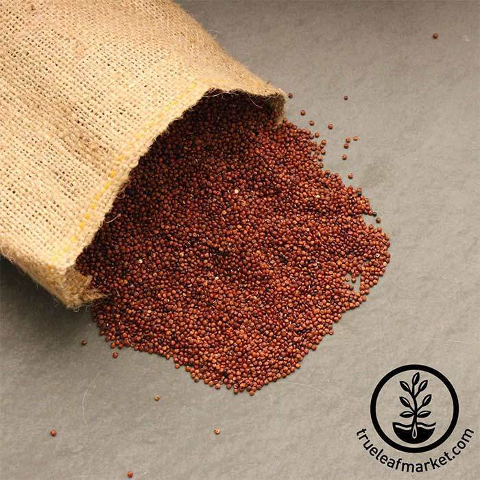 Red Quinoa (organic) - Bulk Grains & Foods
