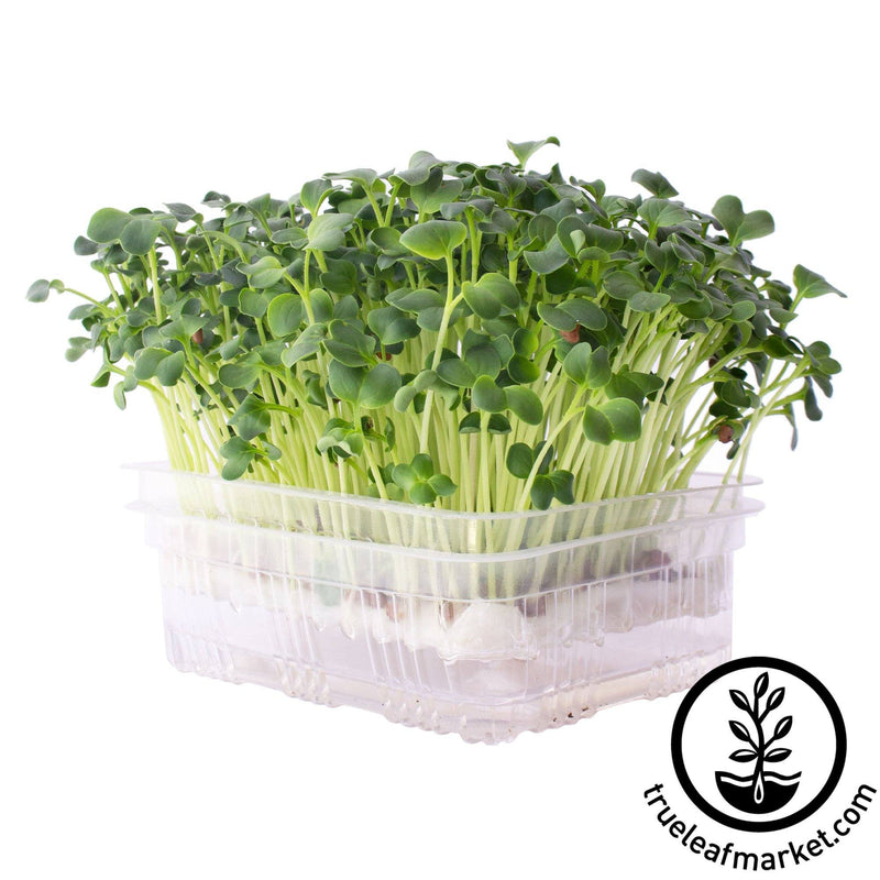 self watering kit microgreens white background