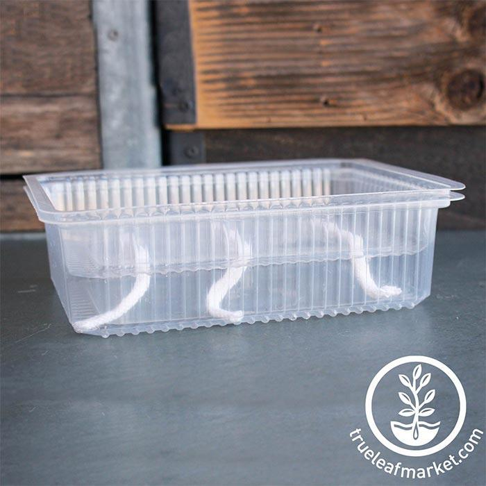 Self-Watering Growing Trays with water example