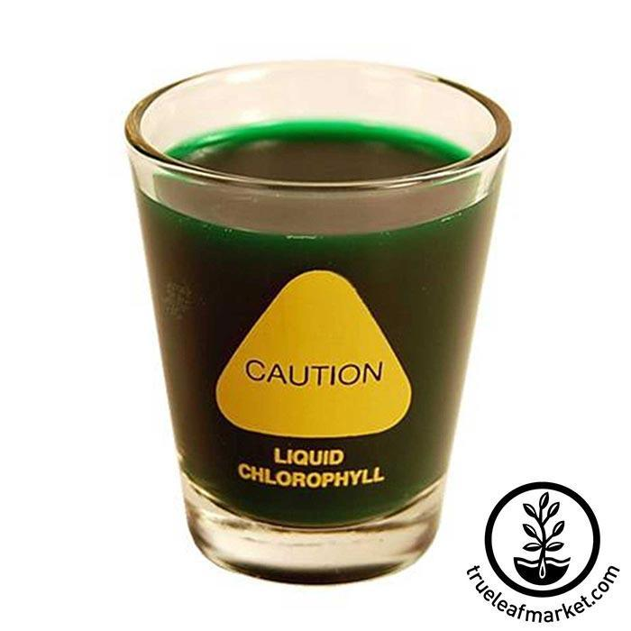 Wheatgrass Shot Glass - Caution Liquid Chlorophyll