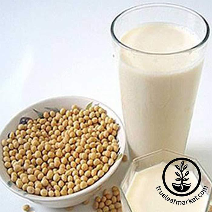 Fresh Organic Soymilk