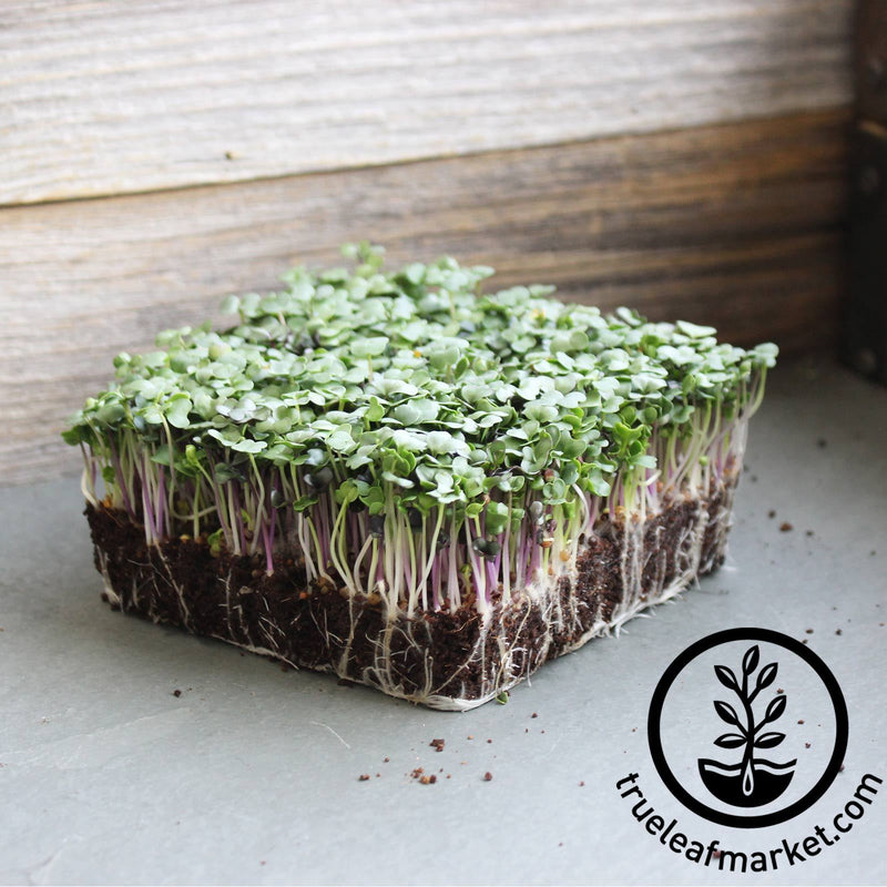 Non-GMO Spicy Microgreens Mix