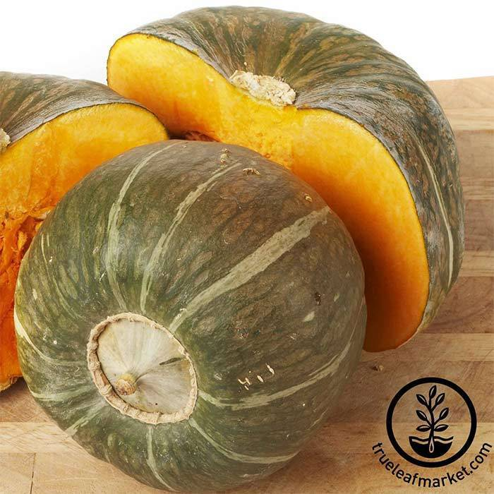 Squash Winter Burgess Buttercup Seed
