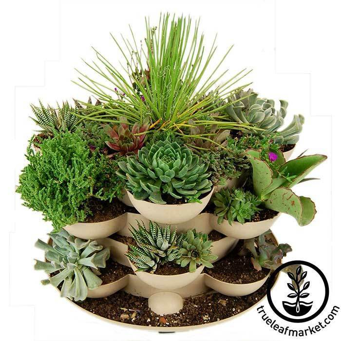 Stack and Grows make excellent succulent gardens!
