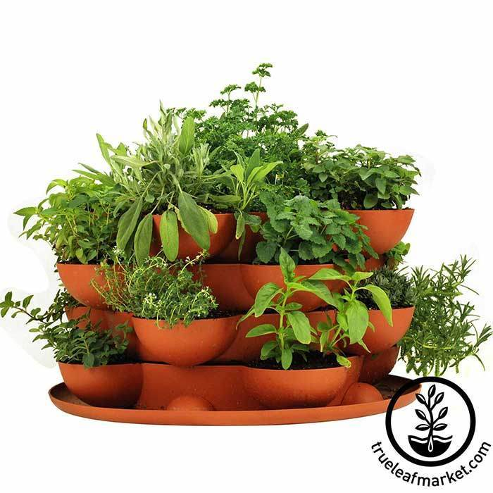 Superbe Stack U0026 Grow With Culinary Herb Garden Kit ...