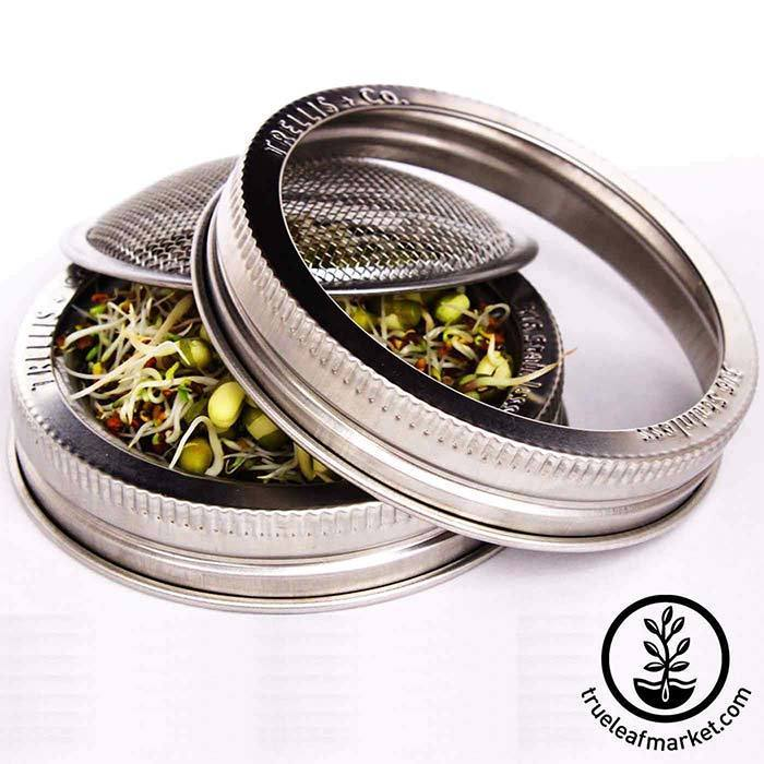 Stainless Steel Wide Mouth Sprouting Jar Lid with sprouts
