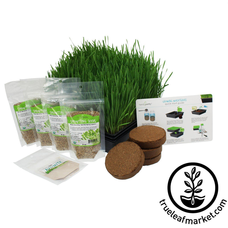 The Organic Wheatgrass Growing Kit white background