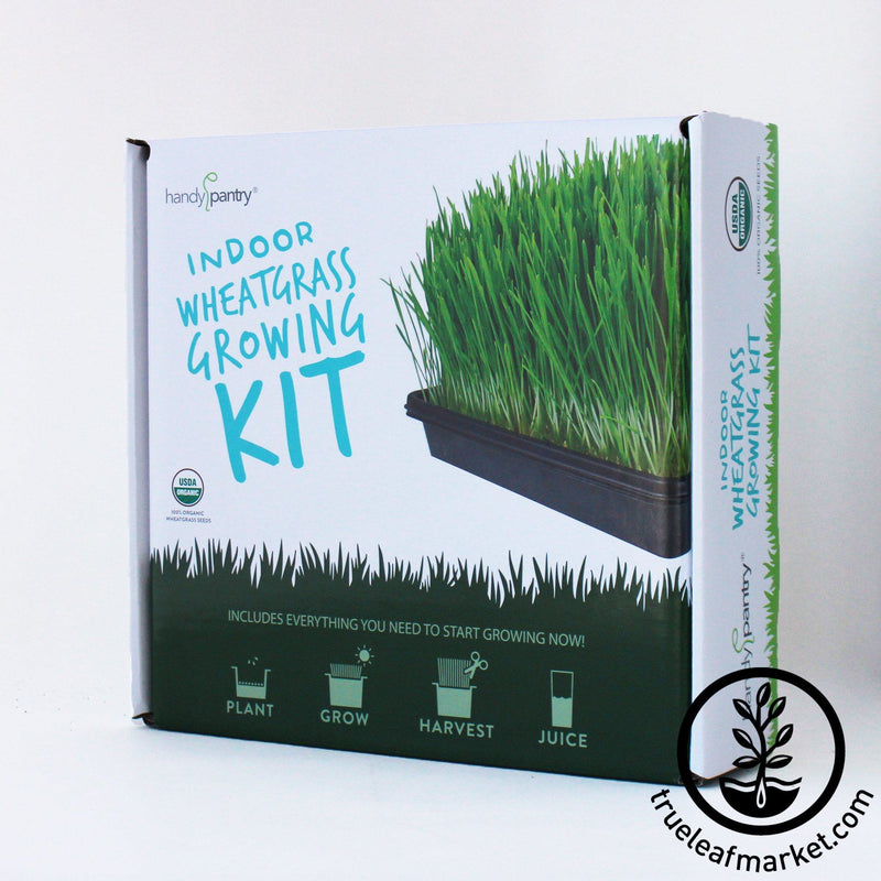 The Organic Wheatgrass Growing Kit box