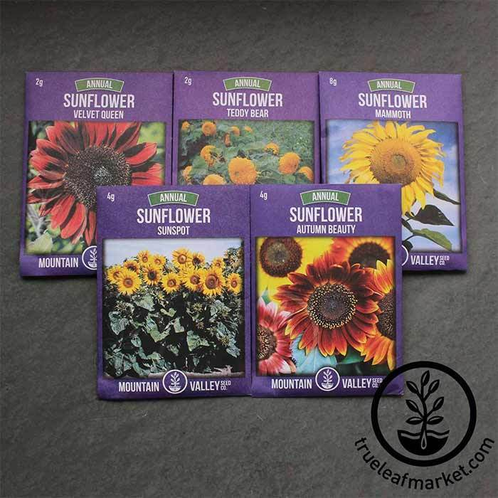 Heirloom Sunflower Seed Collection - 5 Varieties