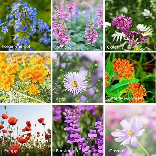 Wildflower Seeds - Hummingbird/Butterfly Mix