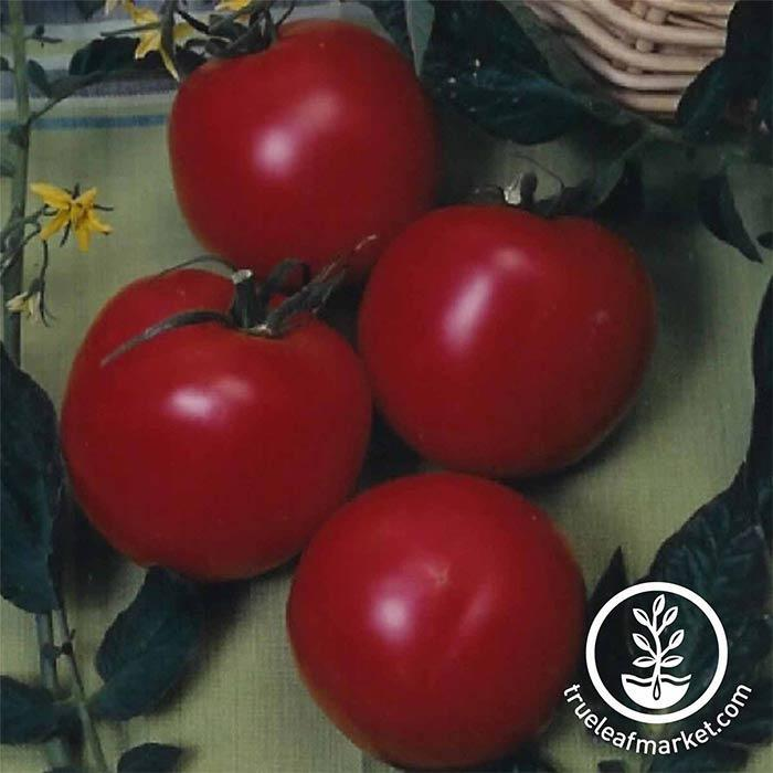 Tomato Arkansas Traveler Seed