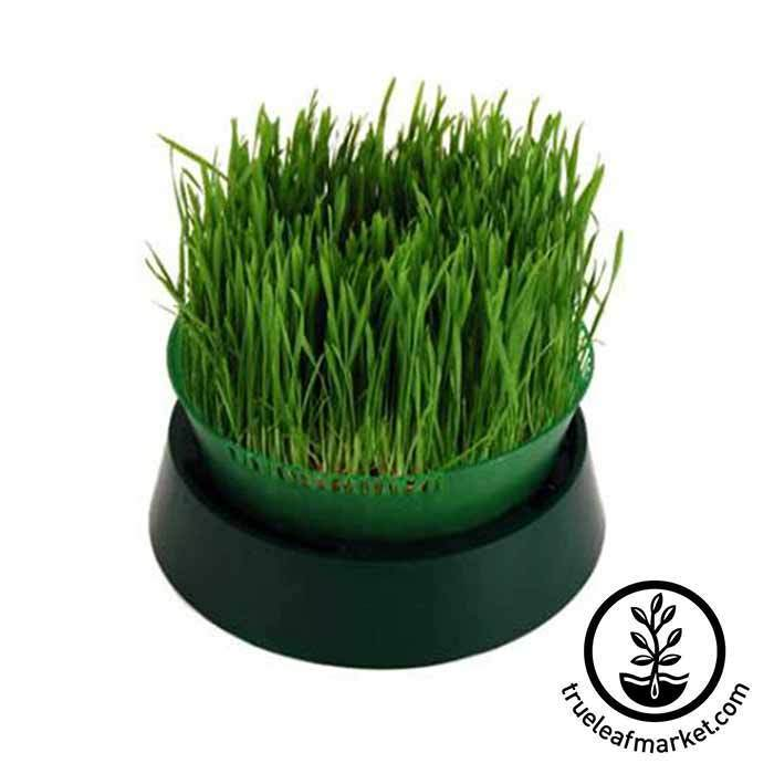 Sprout Garden Tray Sprouter Growing Wheatgrass Hydroponically