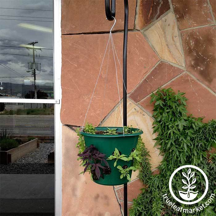 Wire Hanger for Bloom Master Planter - Growing Herbs and Vegetables