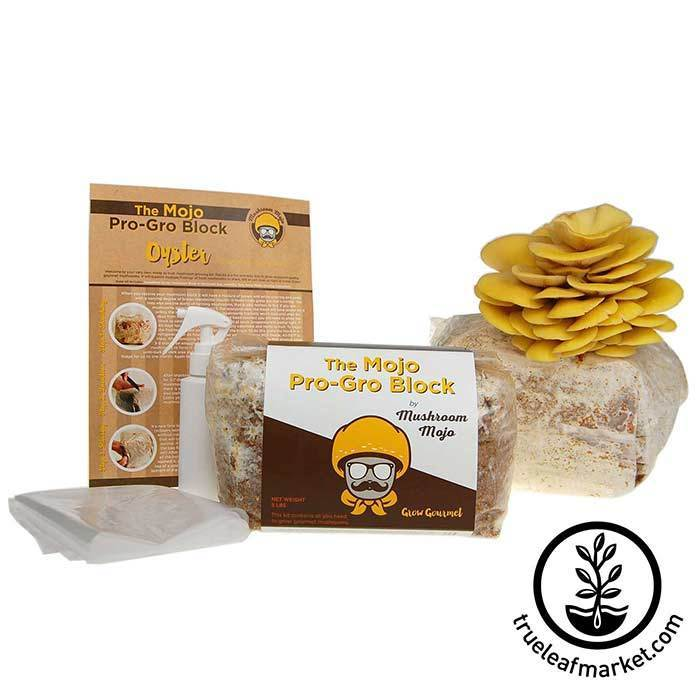 Yellow Oyster Mushroom Growing Kit